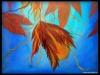 herfstkracht