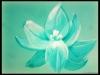 """""""Lotus"""" - SOLD"""